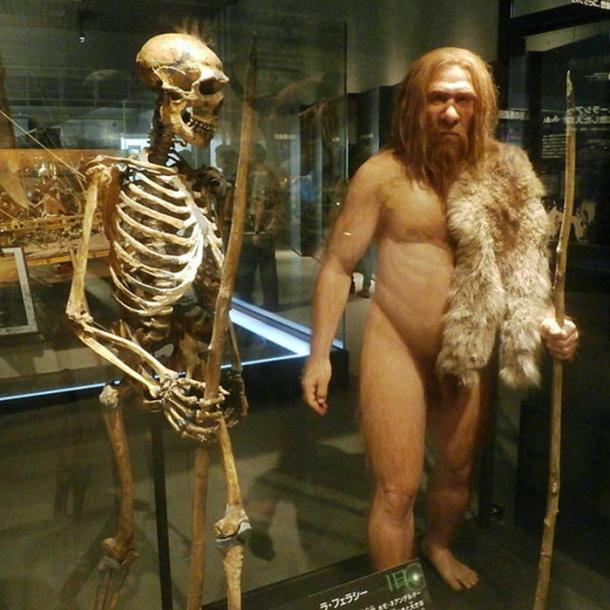 Skeleton and reconstruction of the La Ferrassie 1 Neanderthal man from the National Museum of Nature and Science