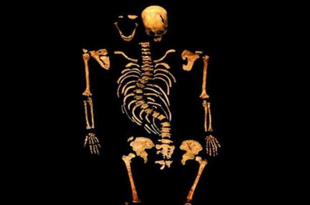Skeleton of Richard III.