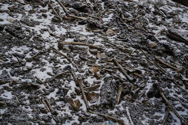 Skeletons at Death Lake. (Nature / Fair Use)