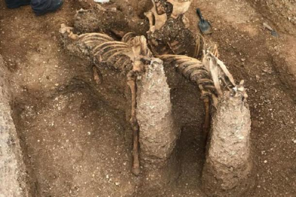 Skeletons of the horses found at the site in Pocklington (MAP Archaeological Practice Limited)