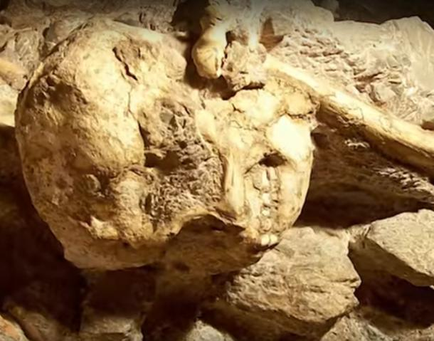 Skull and bones embedded in breccia at the find site in the Sterkfontein caves South Africa.