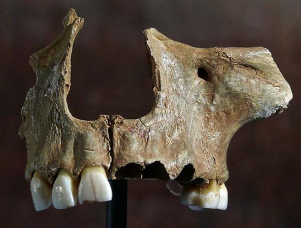 Skull found in Gough's Cave