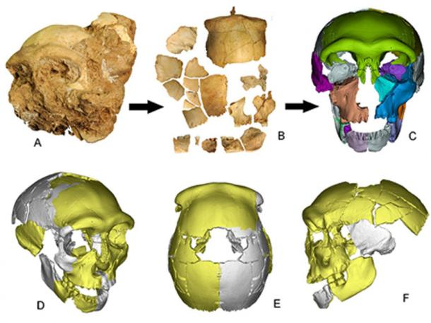 Skull fragments from the Chinese cave are put together to form a mostly complete Pleistocene skull. (Wu Xiujie)