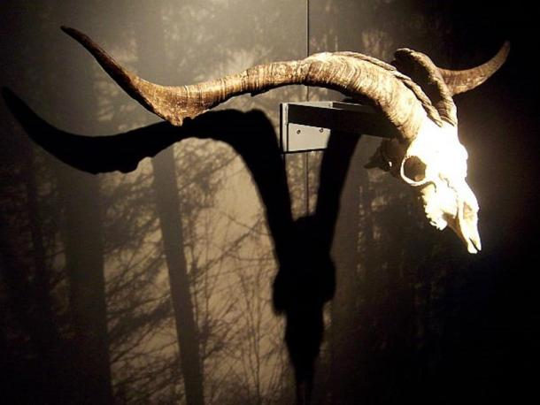 Skull of a male goat, associated with the devil in witches covens in Zugarramurdi.