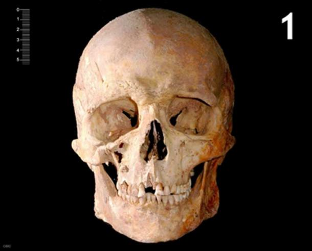 Skull of the skeleton from which the DNA was analyzed.