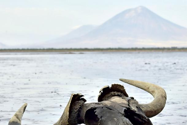 Skull of wildebeest in mud on shallow water. In the background is a volcano Langai. Lake Natron. Tanzania. (Uryadnikov Sergey / Adobe)