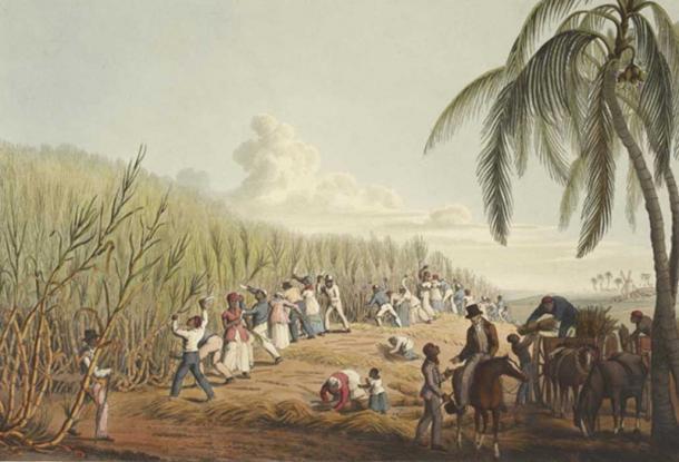 Slaves cutting the sugar cane (1823) by William Clark.