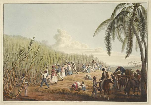 Slaves cutting the sugar cane. (1823) By William Clark.