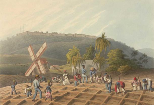 Slaves planting sugar cane. (1823) by William Clark.