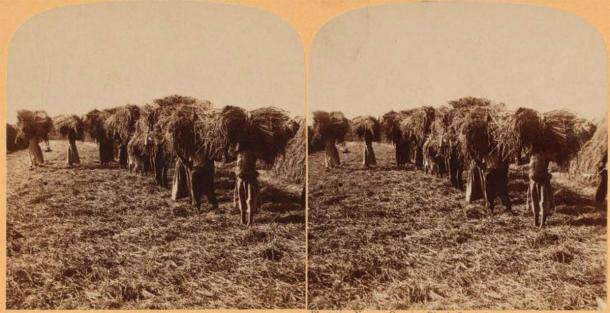 Slaves carrying sheaves of rice, South Carolina. (Public Domain)