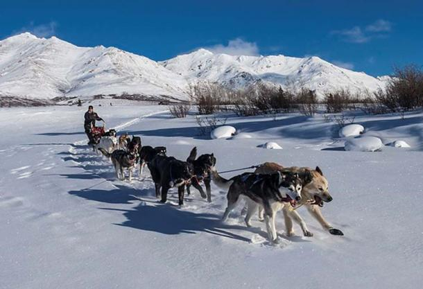 Sled dogs, Denali National Park and Preserve. Jacob W. Frank (Public Domain)