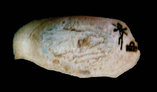 Small piece of ivory, engraved with the name of Queen Neith-hotep of the first dynasty.