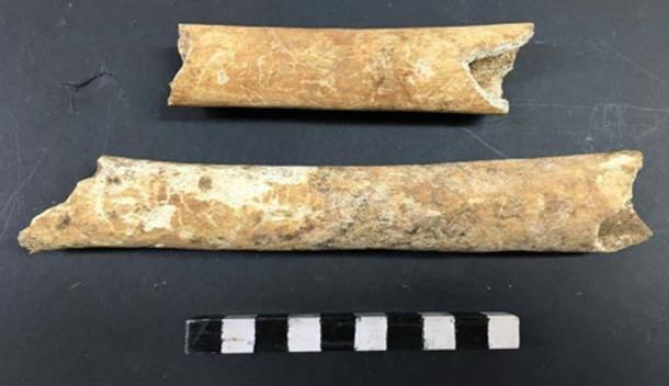 Some of the bones from the ancient burial ground. Credit: Archaeology Wales.