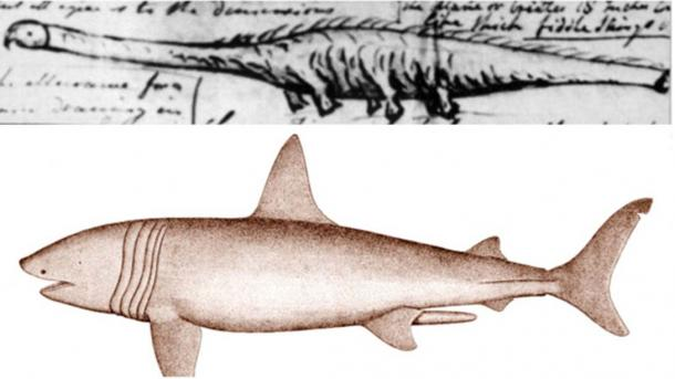 If the Stronsay globster was a basking shark it remains the largest of its species ever recorded.