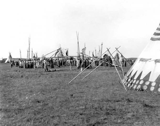Erection of 'Sun Dance lodge', Siksika Nation 1910 (Public Domain)