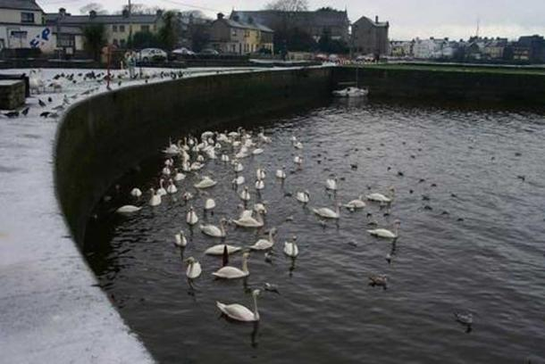Swans in the Claddagh. (CC BY SA 3.0) Legends say Richard Joyce, of Claddagh, created the first Claddagh wedding ring for his beloved.