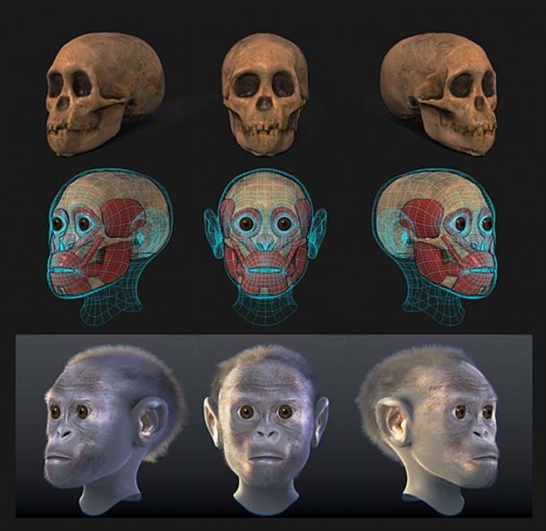 Taung child – Facial forensic reconstruction. (Cicero Moraes / CC BY-SA 4.0)