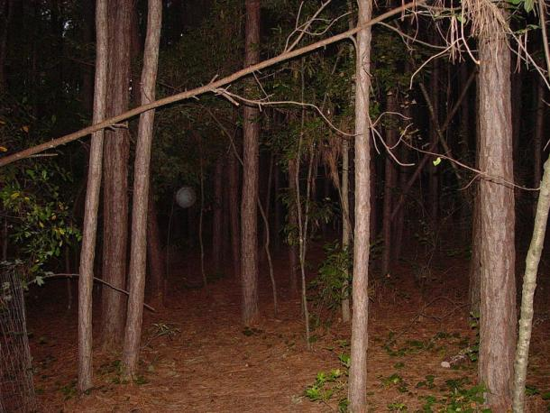 Terrestrial 'orb' in the dimly-lit woods.