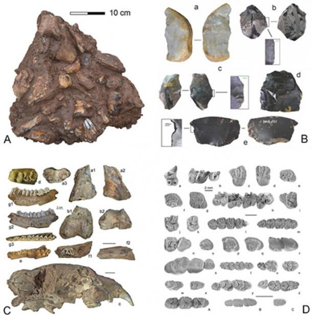 The Chinese cave fossils and artifacts. (Chinanews.com)