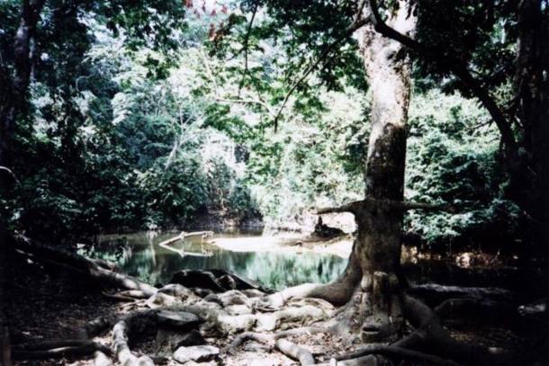 The Osun-Osogbo Sacred Grove