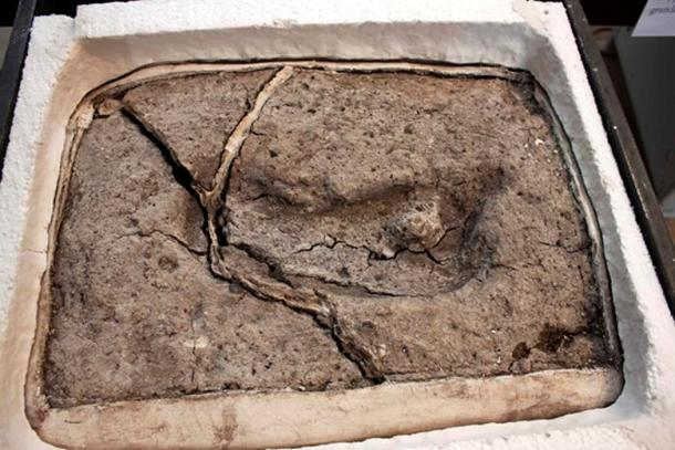 The Pleistocene footprint is the oldest surviving human footprint in the Americas. (Universidad Austral de Chile)