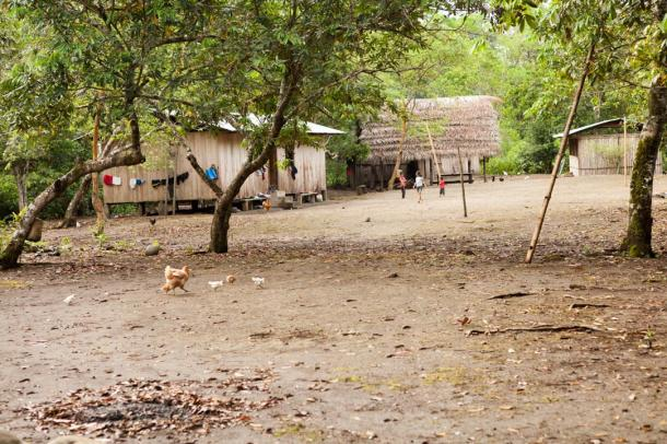 The Shuar camp with kids playing happily and chickens roaming freely
