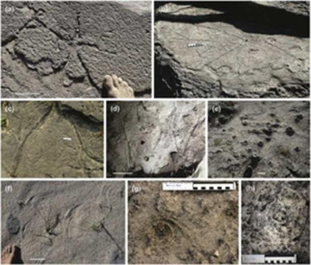 The ancient patterns are being studied from sample and photos taken. (Science Direct)