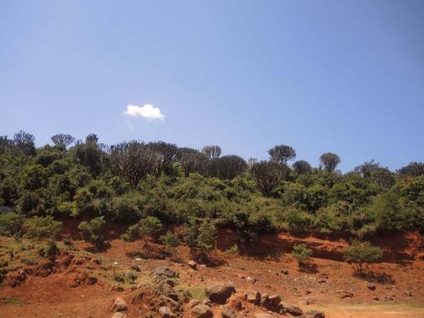 The arid Rift Valley (Ustun, G / CC BY 2.0)