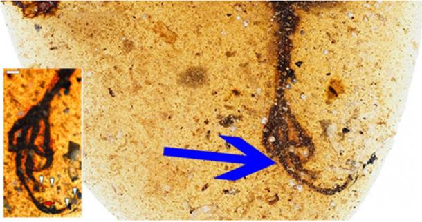 The bird was fossilized in yellow 99 million years ago. (Lida Xing / Current Biology)