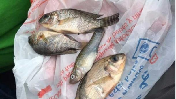 The civil defence agency for the Mexican state of Tamaulipas posted a photo of these fish it says fell from the sky.