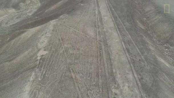 The complete geoglyph of the pelican. (National Geographic)