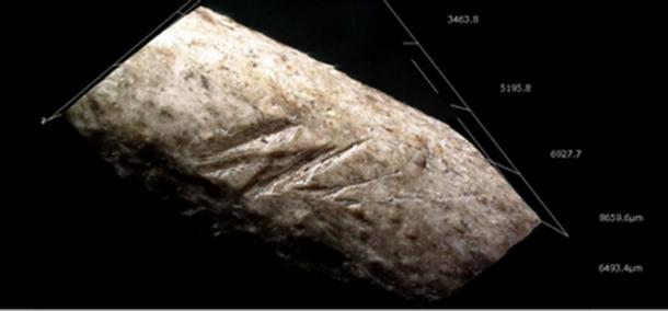 The cut marks found on the bone were considered to be from deliberate defeathering of the bone for some purpose. (Image: Ruth Blasco)