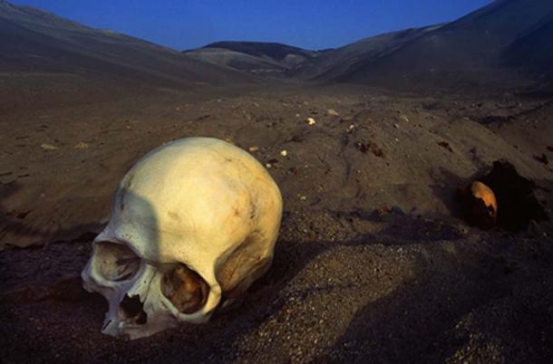 'The desert floor was scattered with skulls and bones' (Image: Willem Daffue)