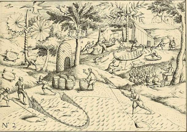 """Image from page 28 of """"The dodo and its kindred; or, The history, affinities, and osteology of the dodo, solitaire, and other extinct birds of the islands Mauritius, Rodriguez and Bourbon"""""""
