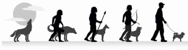The evolution of wolf to domestic pet. (CC BY SA 4.0 )
