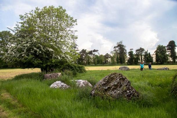 The fairy tree that split the rock at Grange Stone Circle II (Thin Places Mystical Tours)