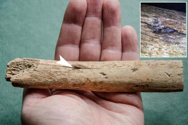The first direct evidence of this is a fragment of a 25,000 year old flint head discovered in Kraków, stuck in a mammoth rib. (P. Wojtal / Science in Poland)