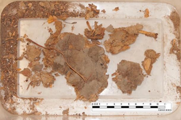 The fossilized coprolite sample prior to analysis. (Sonderman / Texas A&M University)