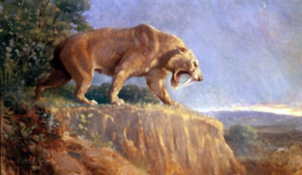 The giant bird could run at considerable speed to predators like the saber-toothed tiger. (FunkMonk / Public Domain)