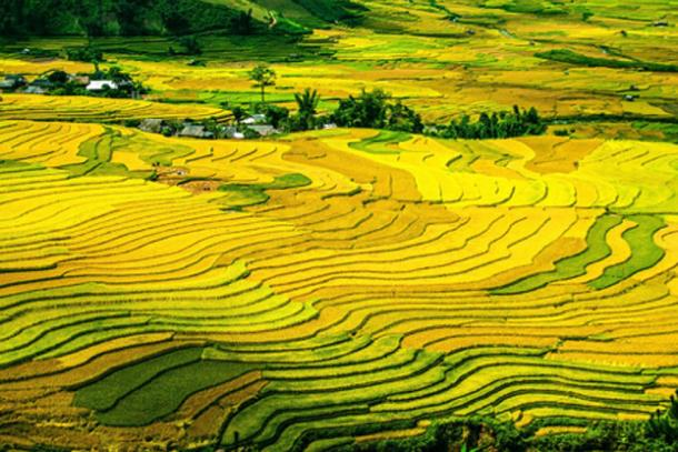 The growth of rice cultivation from 5000 years ago contributed to methane level increase. (Image: CC0)