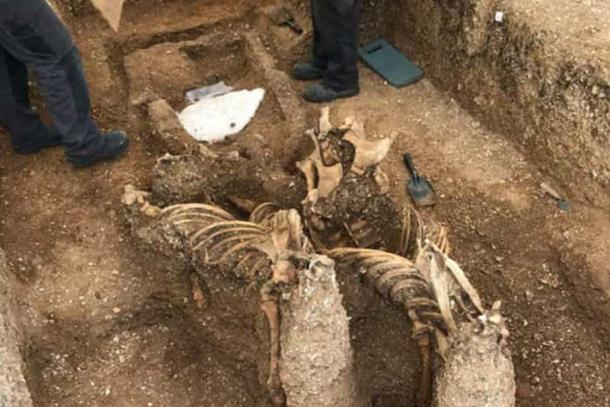 The horses had been buried upright - their heads were removed skulls were removed centuries ago. (Alex Wood /Yorkshire Post)