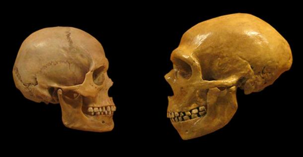 The look of love. Human and Neanderthal skulls