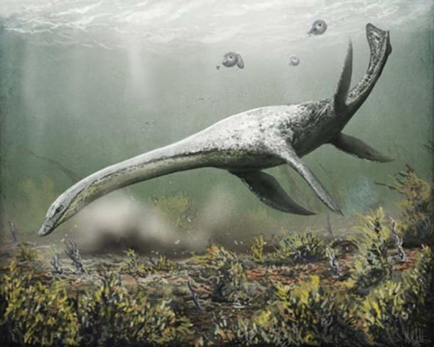 The most popular theory of Nessie – that she is a plesiosaur that somehow survived the mass extinction of the dinosaurs – may finally have been put to rest. Mark Witton, Author provided