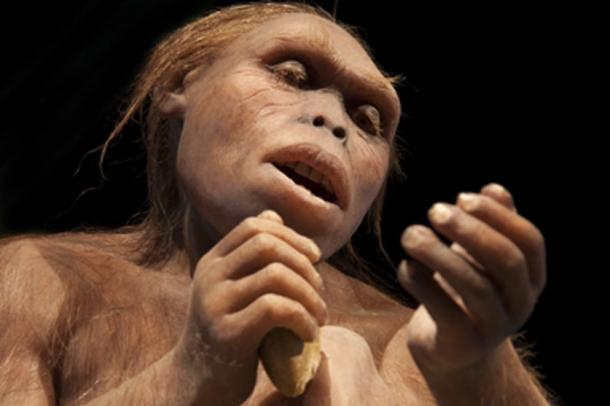 The new study shows that the reduction of Neanderthal fertility may be tied to a lack of food. (procy_ab / Adobe Stock)