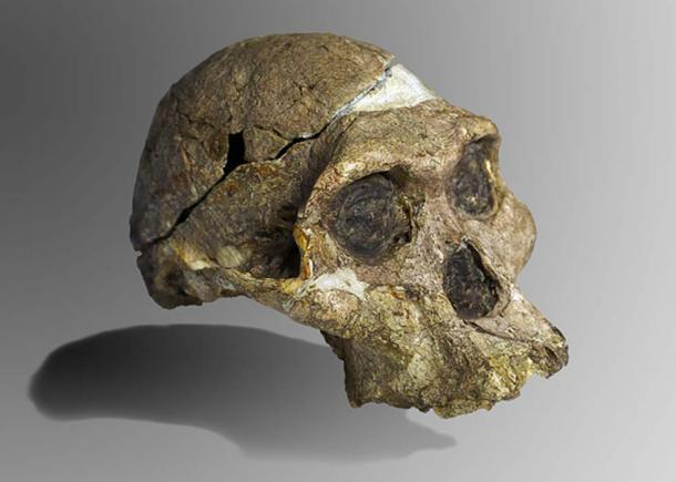 The original complete skull (without upper teeth and lower jaw) of a 2.1 million year old Australopithecus africanus specimen, the so-called Mrs. Ples, discovered in South Africa. (José Braga, Didier Descouens / CC BY SA 4.0)