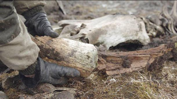 The remains of the extinct beast weigh 23.6kg and are being taken back to regional capital Yakutsk for further detailed study. Images: Innokenty Pavlov
