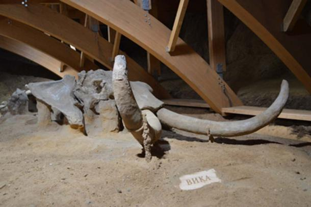 The remains of the million-year-old mammoth which has been found at the archaeological park (despotodstiga/ Adobe Stock)
