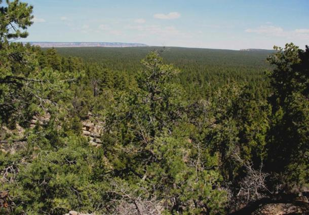 The rim of the Grand Canyon is filled with forests