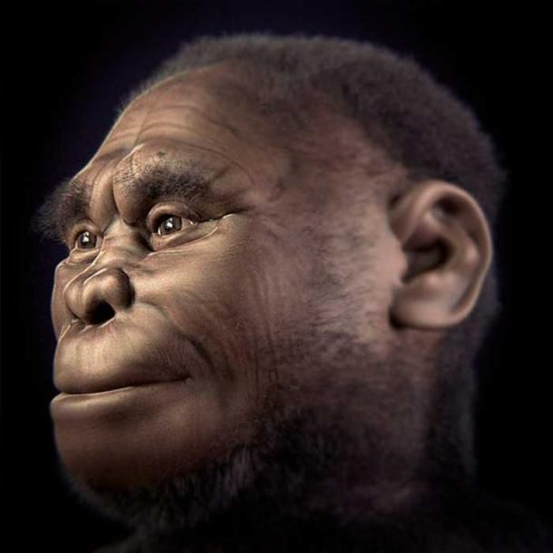 The second version (2.0) of Archaeological Forensic Facial Reconstruction of the individual LB1 of the species Homo floresiensis. (Cicero Moraes et alii/CC BY 4.0)