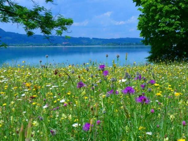 The shepherd came upon wildflowers near a pond. (CC0)
